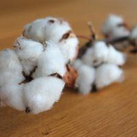 Noces de coton – 1 an de mariage : idée cadeau et signification