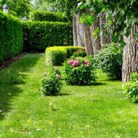 Les différents types de brise-vue pour la maison et le jardin