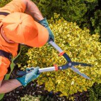 Entretenir son jardin en été, les essentiels