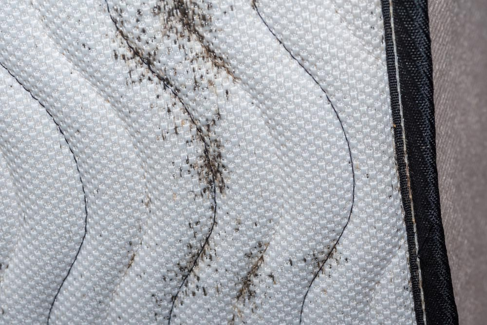 traces-punaises-de-lit